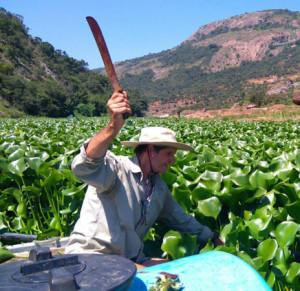 HyacinthGaugingWeirHawarden450